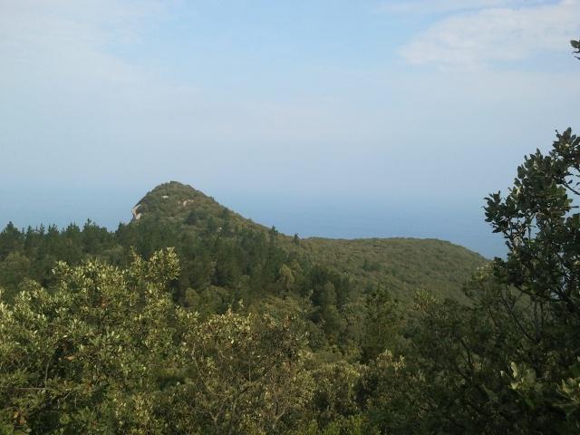ogoño